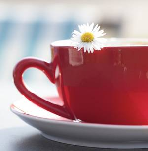 comment le thé blanc aide à maigrir